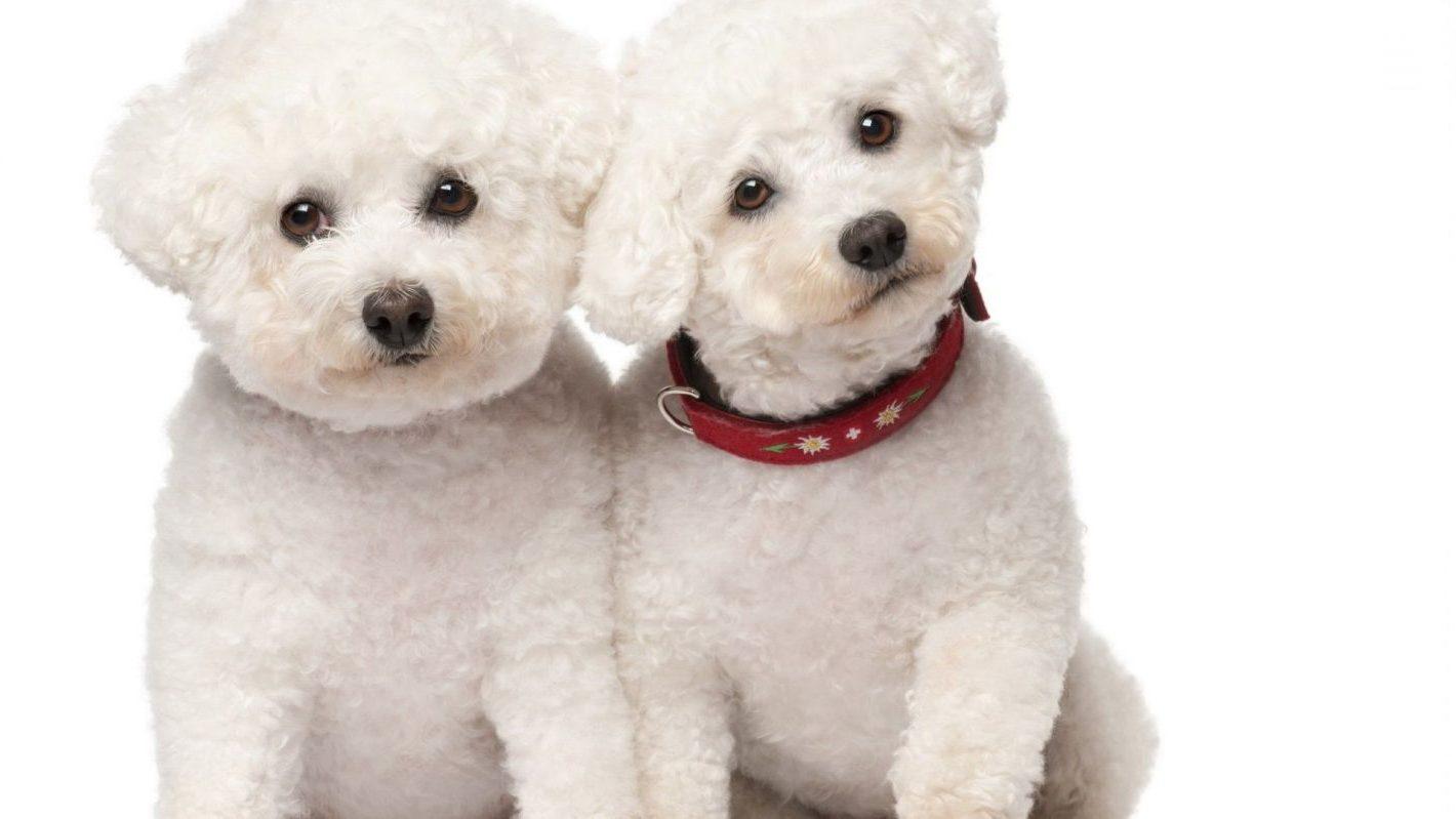 Bambini e cani in casa